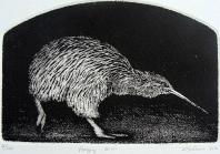 Foraging-Kiwi