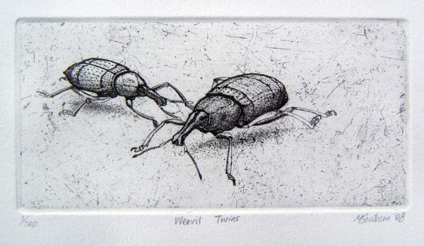 Weevil-Twins