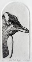 Yellow-Eyed-Penguin