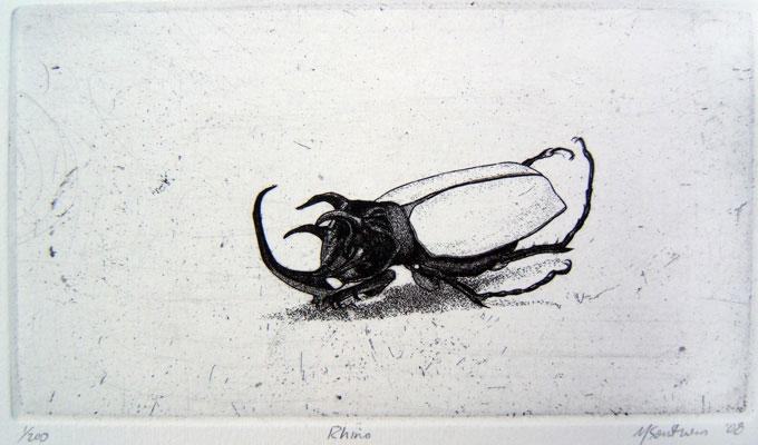 Rhinocerous-Beetle